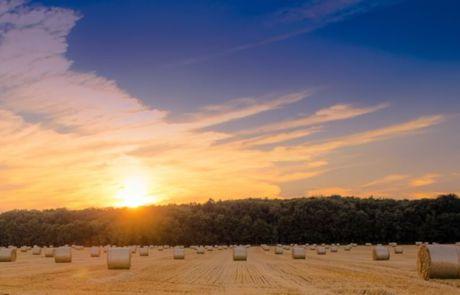 Getreidefeld nach der Ernte im Sonnenuntergang bei Hohen Neuendorf im Landkreis Oberhavel