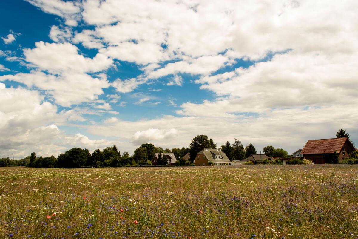 Blumenwiese Großstückenfeld mit Wohnimmobilien im Hintergrund in Mühlenbeck in Mühlenbecker Land