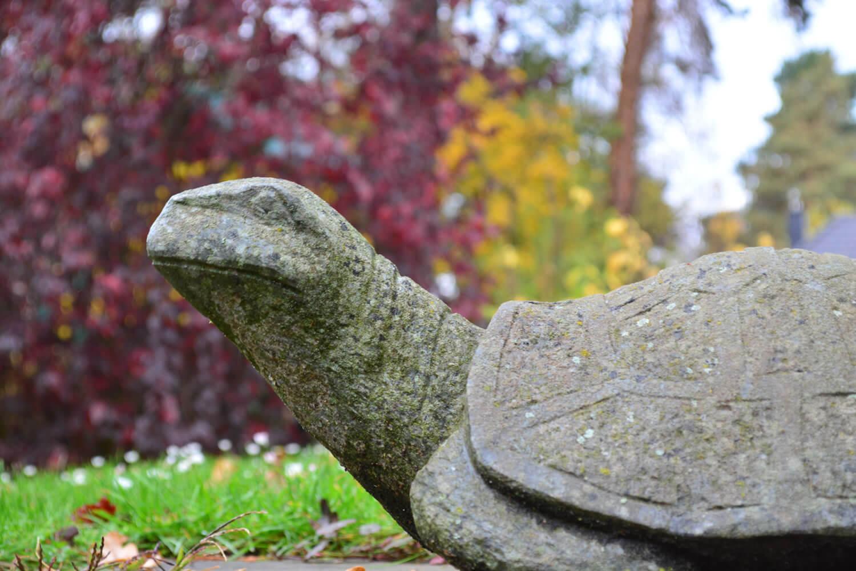 Steinschildkröte in einem Garten in Schildow - Makler Schildow