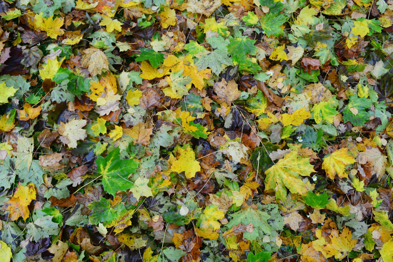 Herbstlaub in einem Schildower Garten - Makler Schildow