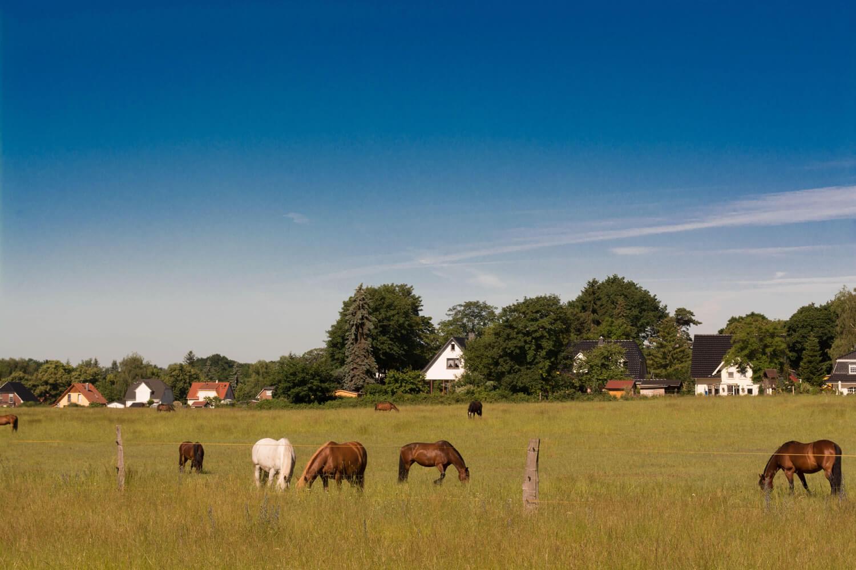 Pferdekoppel im Wohngebiet Schildow - Makler Schildow