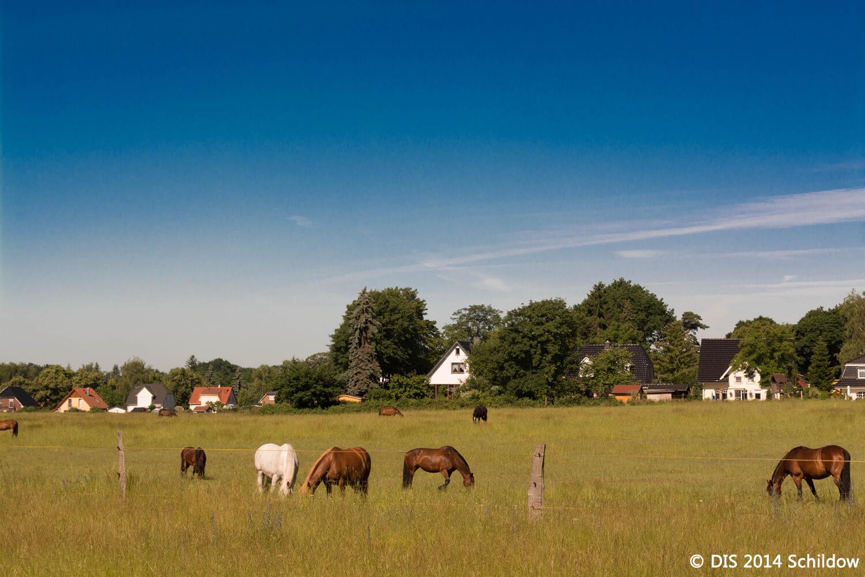 Pferdekoppel, Wiese, Pferde, blauer Himmel, Häuser im Hintergrund, in Schildow, Ortsteil von Mühlenbecker Land