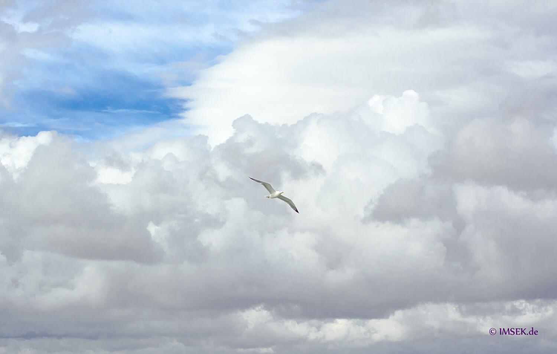 Moeve Flügel Weiß Flug Wolken blauer Himmel